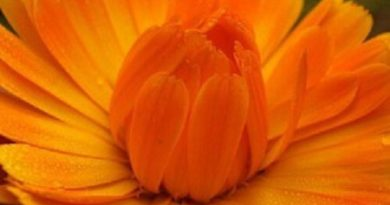 Оранжевый цвет в саду