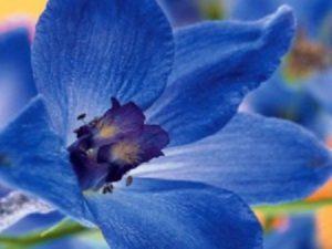 Синий цвет в саду